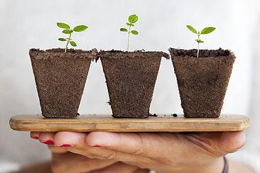 3 Junge Pflanzen in Erde auf einem Holz-Tablet gehalten von zwei Händen einer Person.